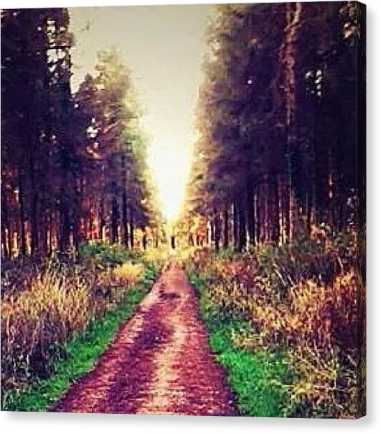 Floss Canvas Print - #path #forest #tree #trees #track by Candy Floss Happy