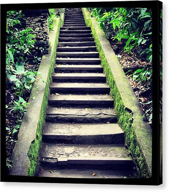 Forest Paths Canvas Print - #path #forest #ubud #bali #jungle by Fajar Triwahyudi