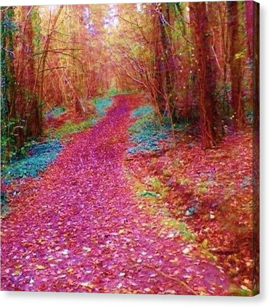 Floss Canvas Print - #path #forest #walkfree #freshair by Candy Floss Happy