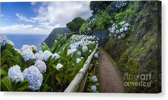 Path Hydrangea Canvas Print by N R