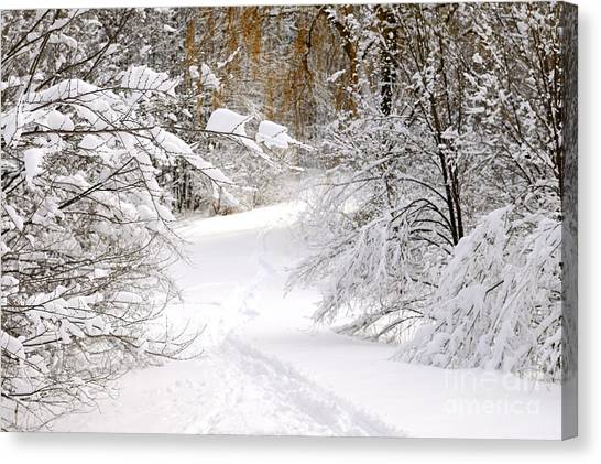 Winter Scenery Canvas Print - Path In Winter Forest by Elena Elisseeva