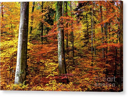 Path Of Autumn 1 Canvas Print