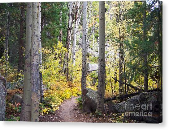 Path Of Peace Canvas Print