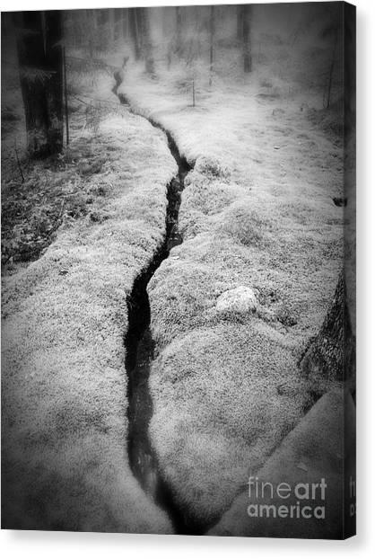 Mossy Forest Canvas Print - Path Taken by Edward Fielding