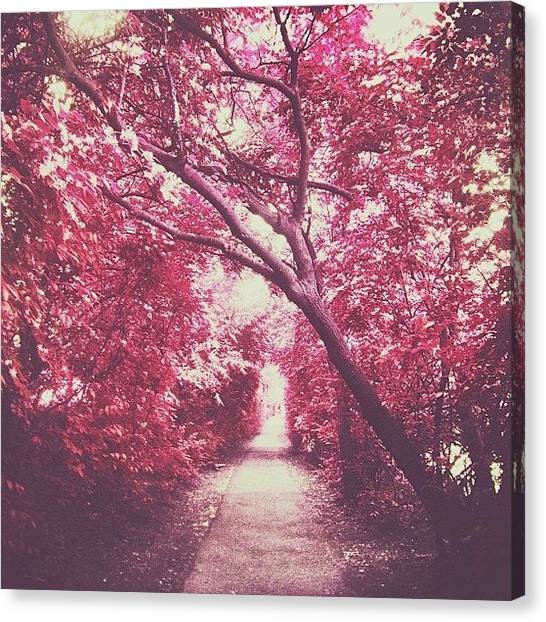 Forest Paths Canvas Print - Path... #trees #path #forest #woods by Delilah Navarro