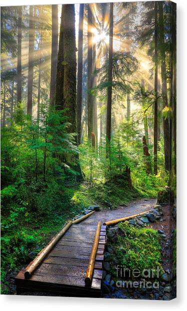 Mossy Forest Canvas Print - Pathway Into The Light by Inge Johnsson