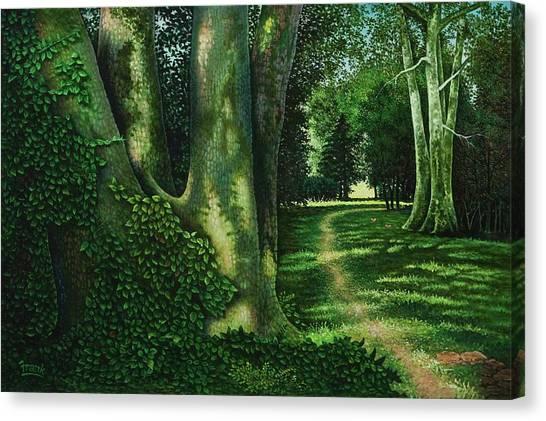 Pathway Through The Sycamores Canvas Print