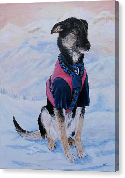 Huskie Canvas Print - Patience by Karen  Peterson