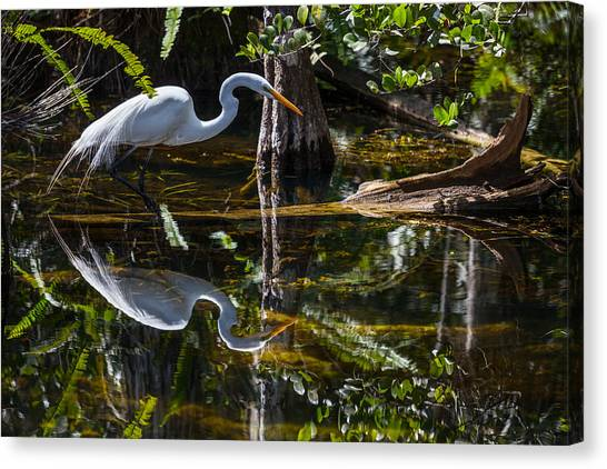 Great Cypress Canvas Print - Patient Hunter by W Chris Fooshee