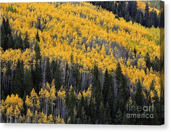 Pattern Of Autumn Canvas Print