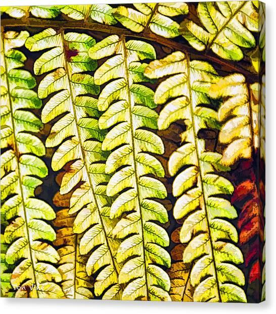 Patterns In Cinnamon Fern Canvas Print