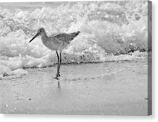 Sandpipers Canvas Print - Pause by Betsy Knapp