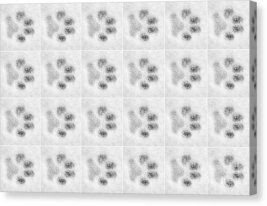 Dog Canvas Print - Paw Prints In The Snow by Natalie Kinnear