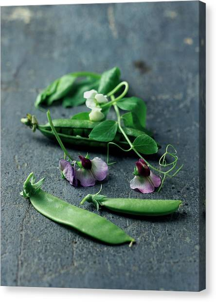 Pea Pods And Flowers Canvas Print