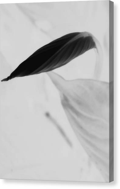 Peace Lily  Canvas Print by Tara Miller