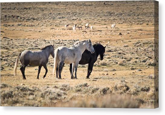 Coexist Canvas Print - Peace On The Prairie - Wild Horses - Antelope - Green Mountain - Wyoming by Diane Mintle
