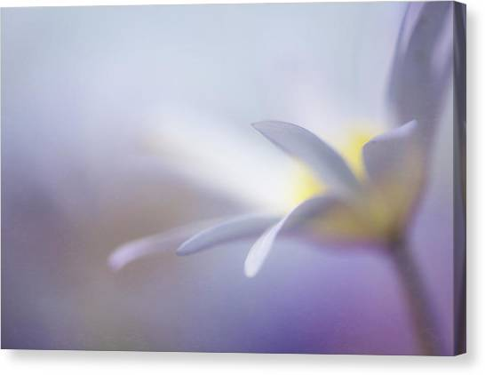 Tenderness Canvas Print - Peace by Penny Myles