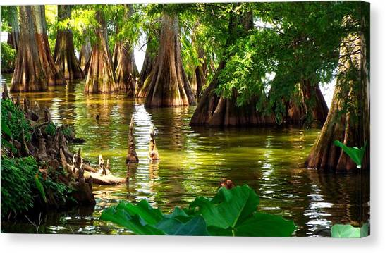 Peaceful Cypress Trees  Canvas Print