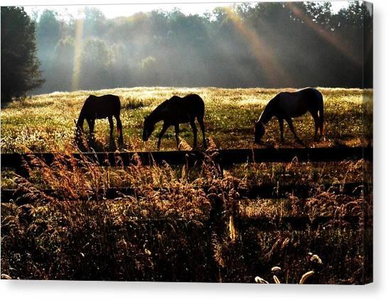 Peaceful Pasture Canvas Print