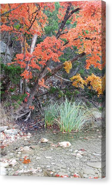 Peaceful Retreat Lost Maples Texas Hill Country Canvas Print