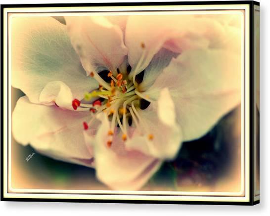 Peach Flower Canvas Print