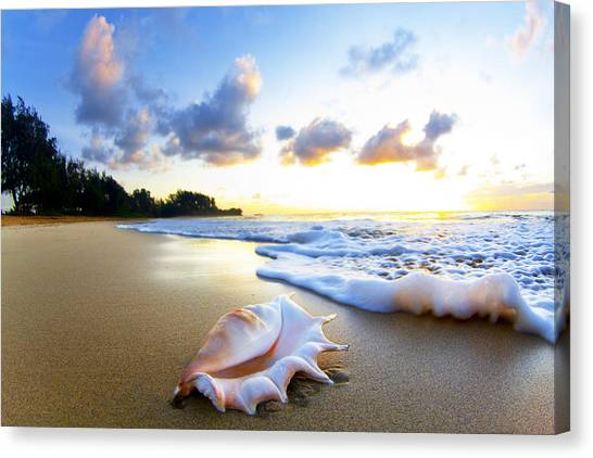 Coastal Art Canvas Print - Peachs N' Cream by Sean Davey