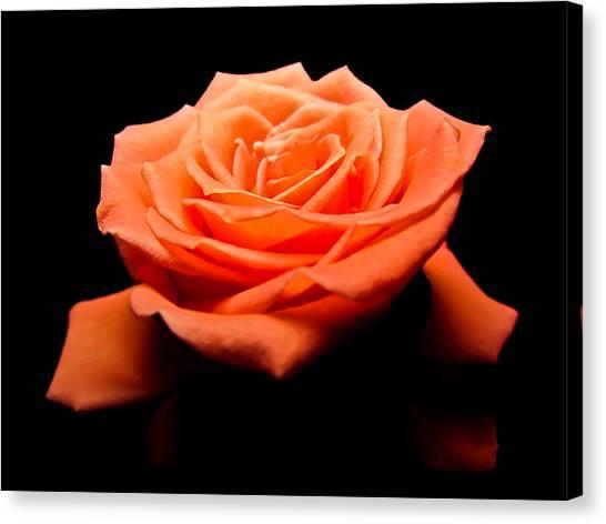 Peachy Rose II Canvas Print
