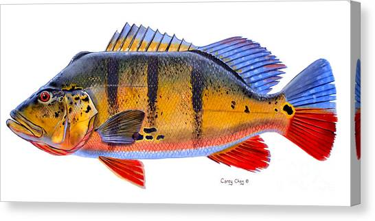 Catfish Canvas Print - Peacock Bass by Carey Chen