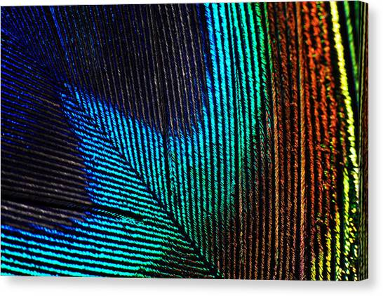 Peacock Feather Canvas Print