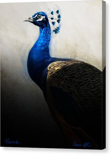 Peacocks Canvas Print - Peacock Portrait by Aaron Blaise
