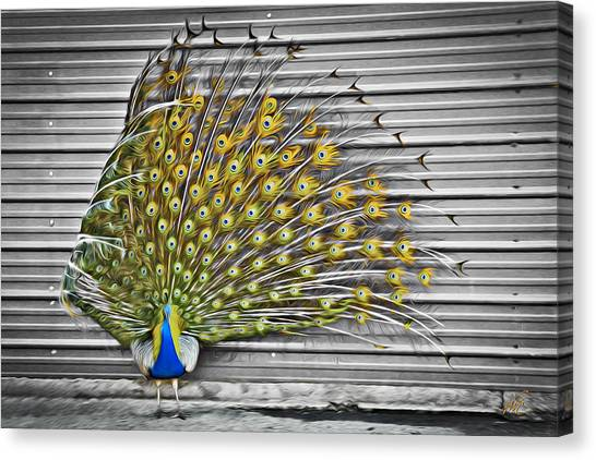 Canvas Print featuring the photograph Peacock by Williams-Cairns Photography LLC