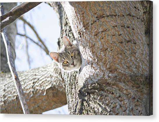 Peaking Cat Canvas Print