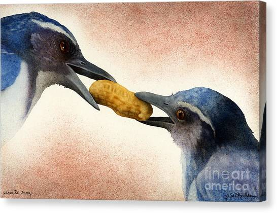 Bluejays Canvas Print - Peanuts Envy... by Will Bullas