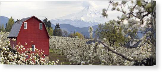 Pear Tree Orchard In Hood River Oregon Canvas Print