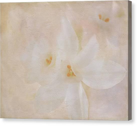 Pearl On Petals Canvas Print