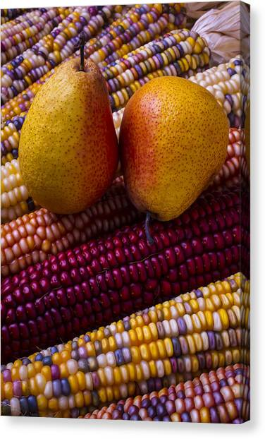 Indian Corn Canvas Print - Pears And Indian Corn by Garry Gay