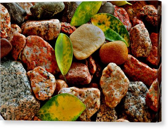 Pebbles And Leaves Canvas Print