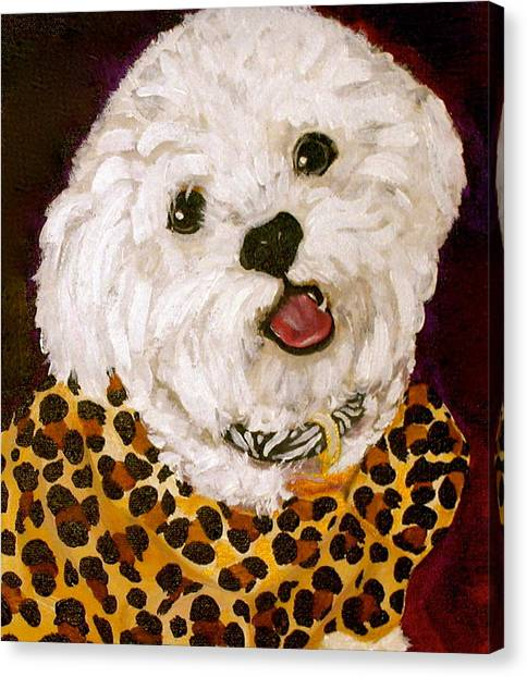 White Maltese Canvas Print - Pebbles by Debi Starr