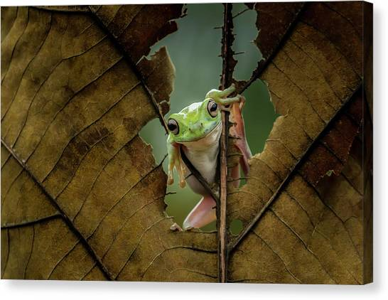 Frogs Canvas Print - Peek A Boo by Andreas Karyadi