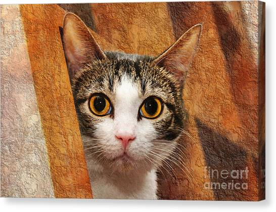 Andee Design Kittens Canvas Print - Peek A Boo I See You by Andee Design