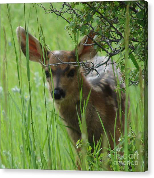 Playing Peek A Boo In Evergreen Colorado Canvas Print