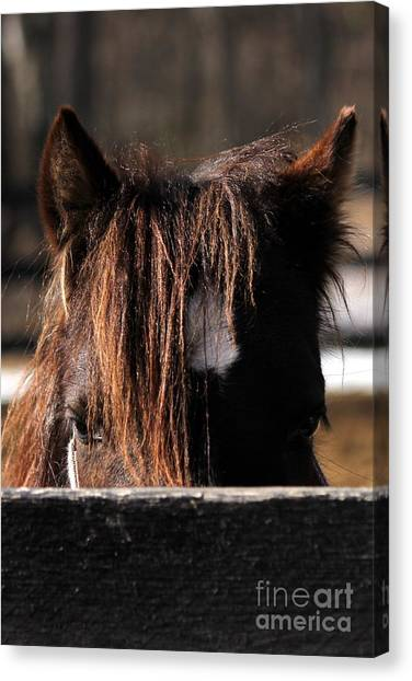 Peek-a-boo Pony Canvas Print