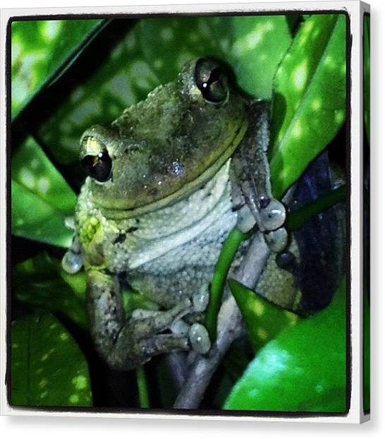 Frogs Canvas Print - Peek-a-boo Tree Frog by J Michael Bragg Photography
