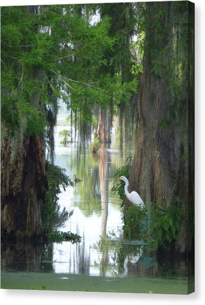 Peeking Thru Natures Swamp Window Canvas Print