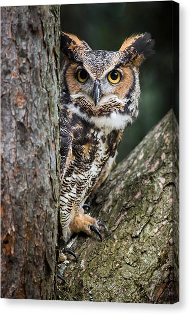 Peering Out Canvas Print