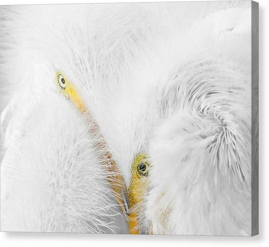Peering Thru Feathers Canvas Print