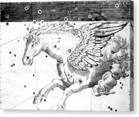 Pegasus Canvas Print - Pegasus Constellation by Royal Astronomical Society/science Photo Library