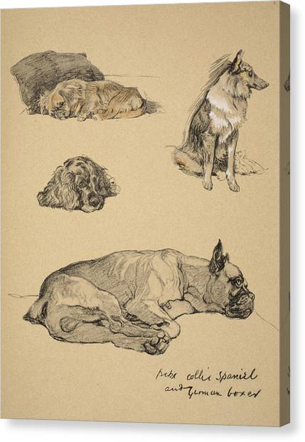 Cocker Spaniels Canvas Print - Peke, Collie, Spaniel And German Boxer by Cecil Charles Windsor Aldin