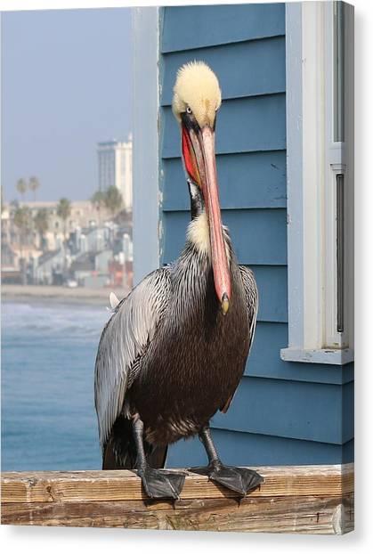 Pelican - 4 Canvas Print