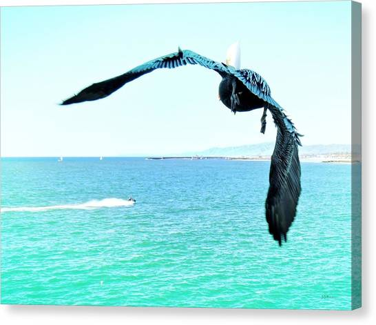 Pelican And Jetski Canvas Print by Brian D Meredith